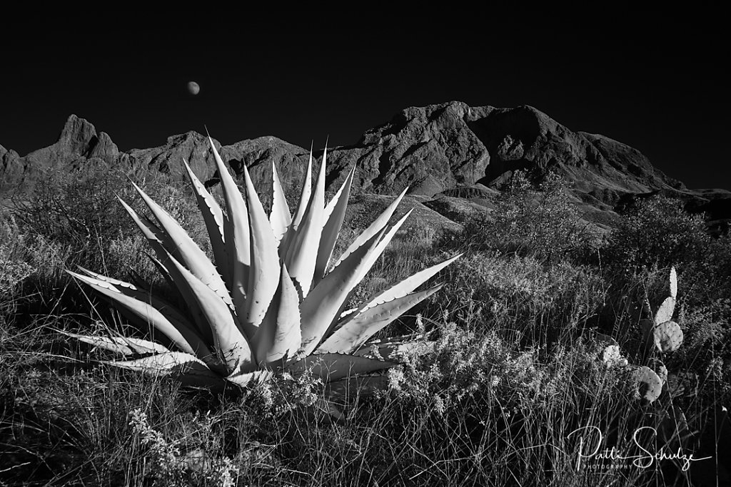 Agave and Moon