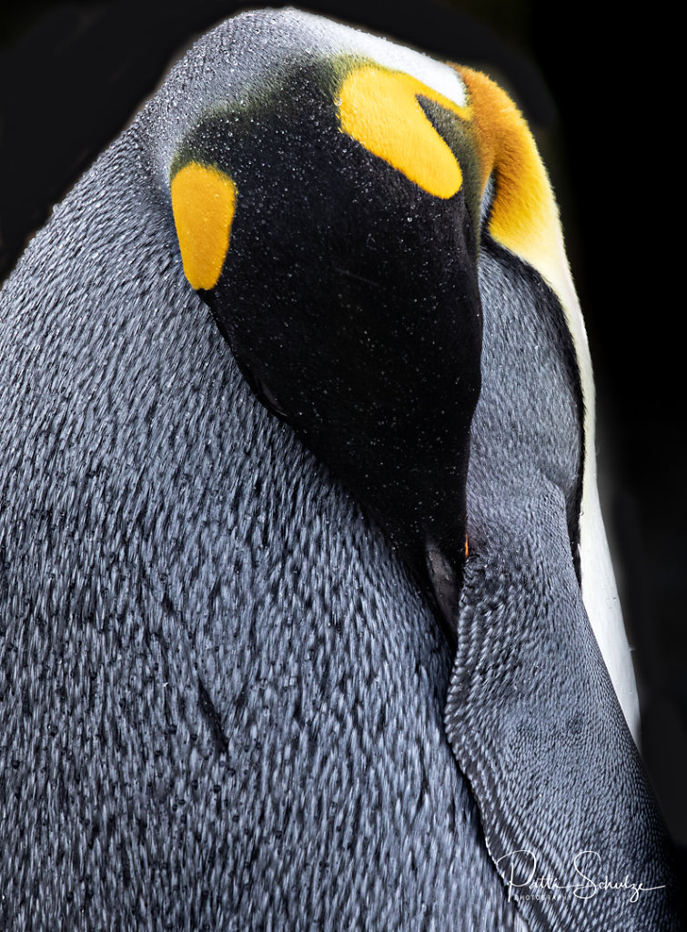 Penguin Abstract II